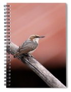 Nuthatch - Bird - Barn Roof Spiral Notebook