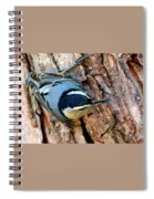 Nuthatch Heading Down Spiral Notebook