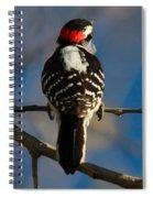 Nuttalls Woodpecker Spiral Notebook