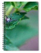 Nymphal Himipterian 2 Spiral Notebook