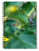 Nymphal Himipterian 3 Spiral Notebook