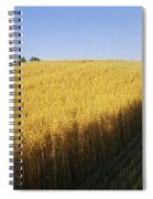 Oat Crops On A Landscape, County Dawn Spiral Notebook
