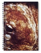 Octopus Macro Spiral Notebook