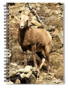 Oh Really? Spiral Notebook