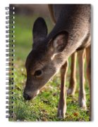 Oh So Sweet Spiral Notebook