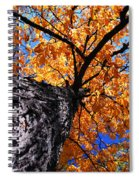 Old Elm Tree In The Fall Spiral Notebook
