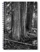 Old Growth Cedar Trees - Montana Spiral Notebook