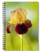 Old Time Two Toned Burgundy And Gold Iris Spiral Notebook