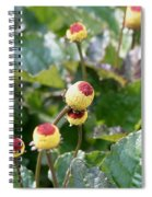 Olive Garden Spiral Notebook