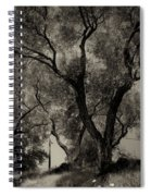 Olive Trees 9 Spiral Notebook