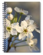 One Fine Morning In Bradford Pear Blossoms Spiral Notebook