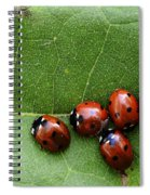 One Lady Bug Voted Off The Island Spiral Notebook