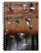 One Last Swallow Spiral Notebook