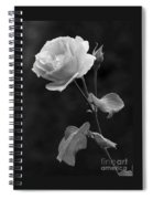 One Rose In Black And White Spiral Notebook