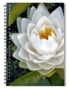 Optical Illusion In A Waterlily Spiral Notebook