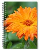 Orange And Green II Spiral Notebook