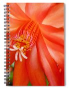 Orange Cactus Spiral Notebook