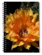 Orange Echinopsis Flower  Spiral Notebook