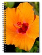 Orange Hibiscus Spiral Notebook