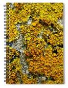 Orange Lichen - Xanthoria Parietina Spiral Notebook