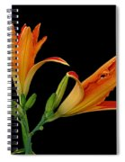 Orange Lily On Black Spiral Notebook