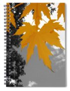 Orange Maple Leaves Spiral Notebook