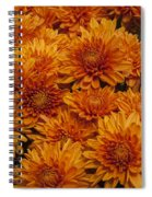 Orange Mums Spiral Notebook