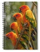 Orange Parakeets Chiang Mai Thailand Spiral Notebook