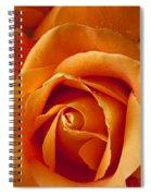 Orange Rose Close Up Spiral Notebook