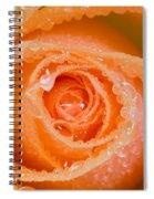 Orange Rose With Dew Spiral Notebook