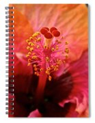 Orange Sherbert Hibiscus Spiral Notebook