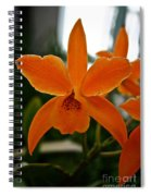 Orange Sherbert  Orchid Spiral Notebook