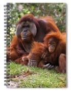 Orangutan Mother And Baby Spiral Notebook