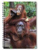 Orangutans Spiral Notebook