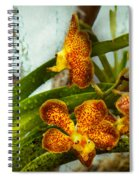 Orchid - Oncidium - Ripened   Spiral Notebook