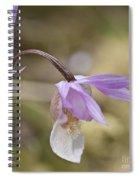 Orchid Calypso Bulbosa - 1 Spiral Notebook
