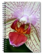 Orchid Close Up Spiral Notebook