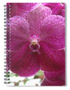 Orchid Cluster Spiral Notebook