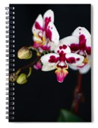 Orchid Flowers Against Black Background Spiral Notebook