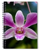 Orchid In Kandy Spiral Notebook
