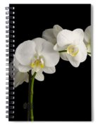Orchid On Black Spiral Notebook