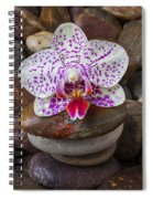 Orchid On Stack Of Rocks Spiral Notebook