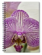 Orchid Originality Spiral Notebook