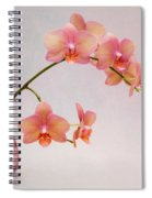 Orchids In A Pink Vase Spiral Notebook