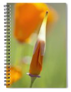 Oregon, United States Of America Poppy Spiral Notebook
