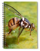 Oriental Fruit Fly Laying Eggs Spiral Notebook