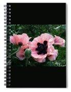Oriental Poppies Spiral Notebook