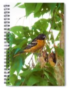 Oriole And Babies Spiral Notebook