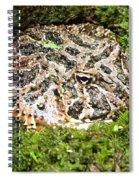 Ornate Horned Frog Spiral Notebook