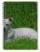 Orvis 0360 Spiral Notebook
